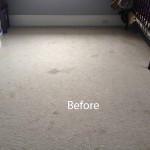 Bedroom-Wall-to-Wall-Carpet-Cleaning-Newark-A