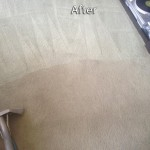 Newark-Carpet-Cleaning-Company