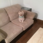 Newark-Sofa-Pet-Stain-Cleaning