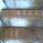Newark-Stairs-Carpet-Cleaning